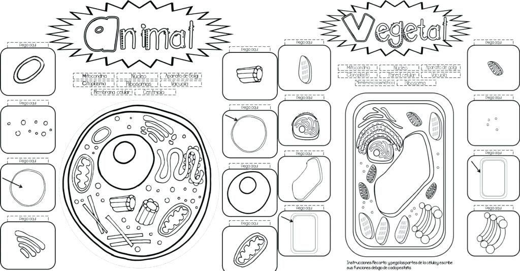 paginas para colorear de celulas para y la y animal dibujos para ...