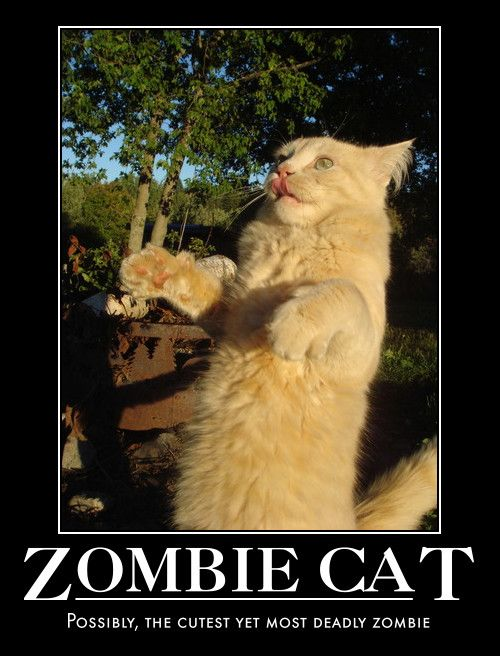 Http Fun Gallery Com Wp Content Uploads 2011 10 Funny Zombie