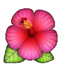 Hibiscus Emojis Emoji Flower Emoji Emoji Stickers