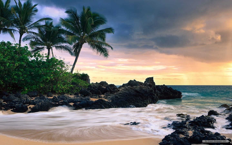 Hawaiian Hd Desktop Wallpapers Beach Wallpaper Hawaii Beaches Palm Trees Beach Wallpaper glass ball beach sand wave