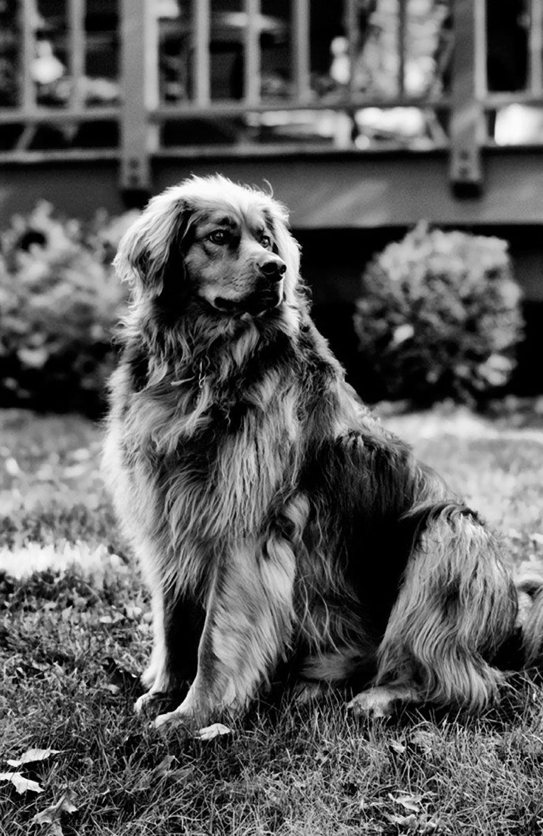 Photo-of-Buddy-by-Rob-Webster-of-Clifton-Park-NY