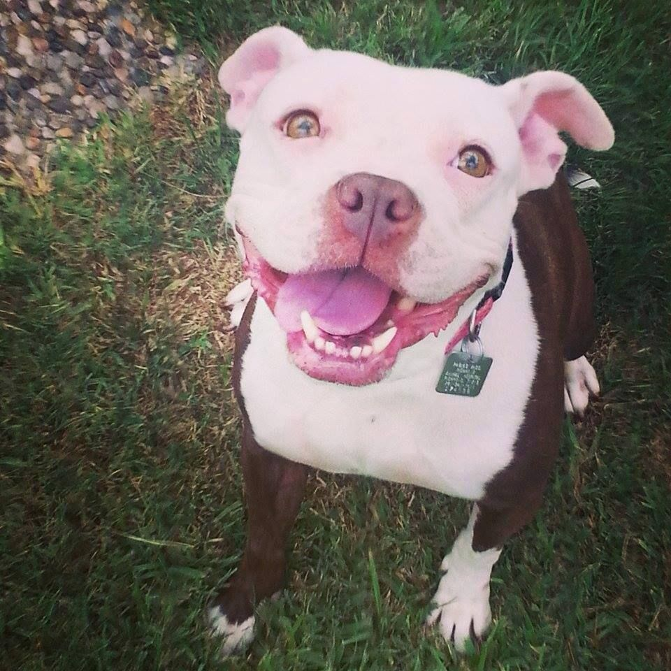 BEAUTIFUL GIRL NEEDS FOREVER HOME,IN BOARDING,MONEY IS
