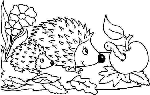 Mother And Baby Hedgehog Meet Caterpillar Apple Coloring Pages Coloring Sun Ausmalbilder Ausmalen Ausmalbilder Tiere