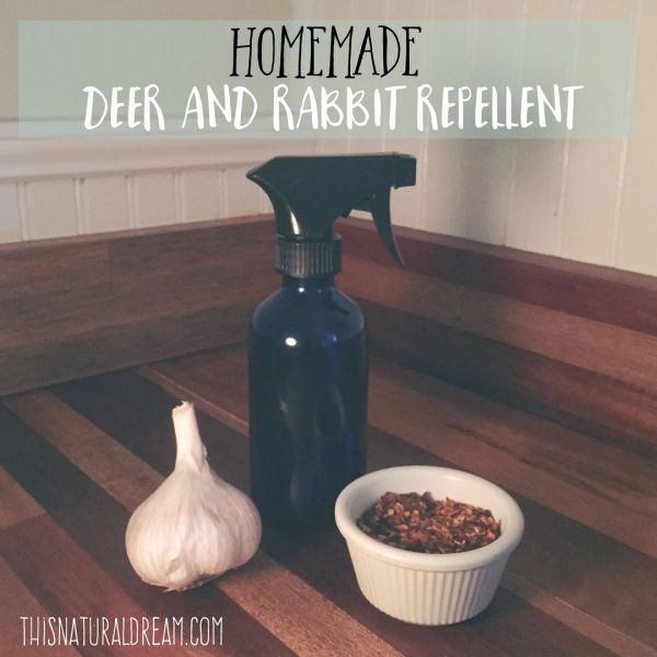 Homemade Rabbit And Deer Repellent ↟this Natural Dream