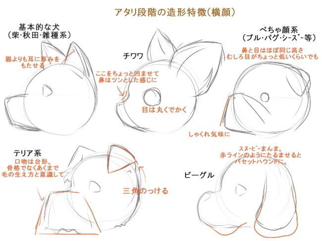 アタリ段階の造形特徴横顔 基本的な犬柴秋田雑種系 猫よりも