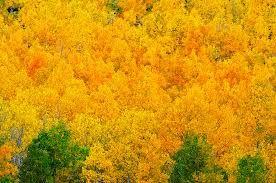 beautiful trees - Google Search