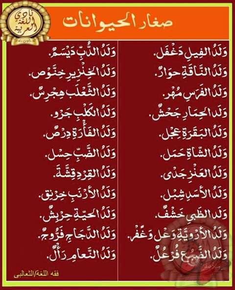 صغار الحيوانات في اللغة Islamic Phrases Learn Arabic Language Arabic Language