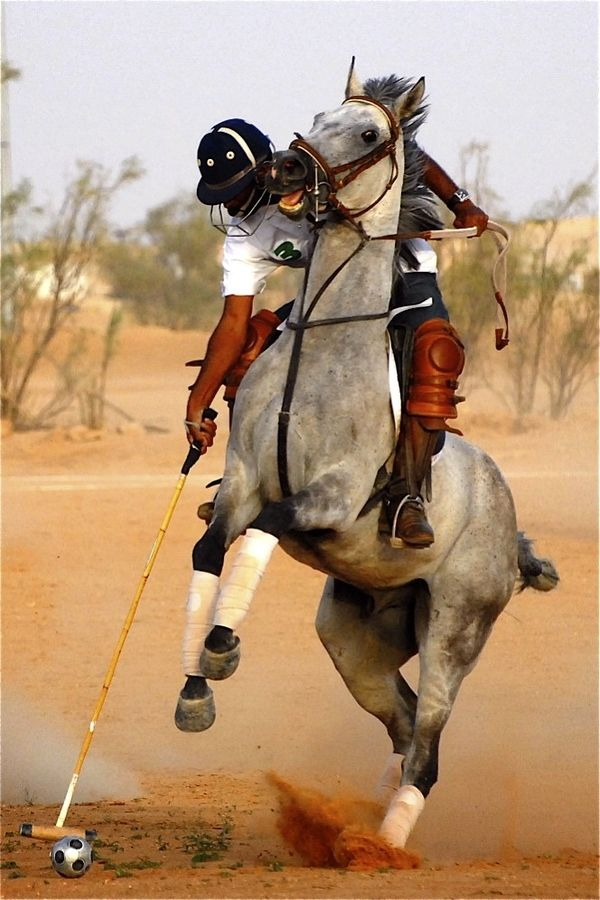♂ Polo Sport horse Middle East Polo by Lynn Nonas, via 500px