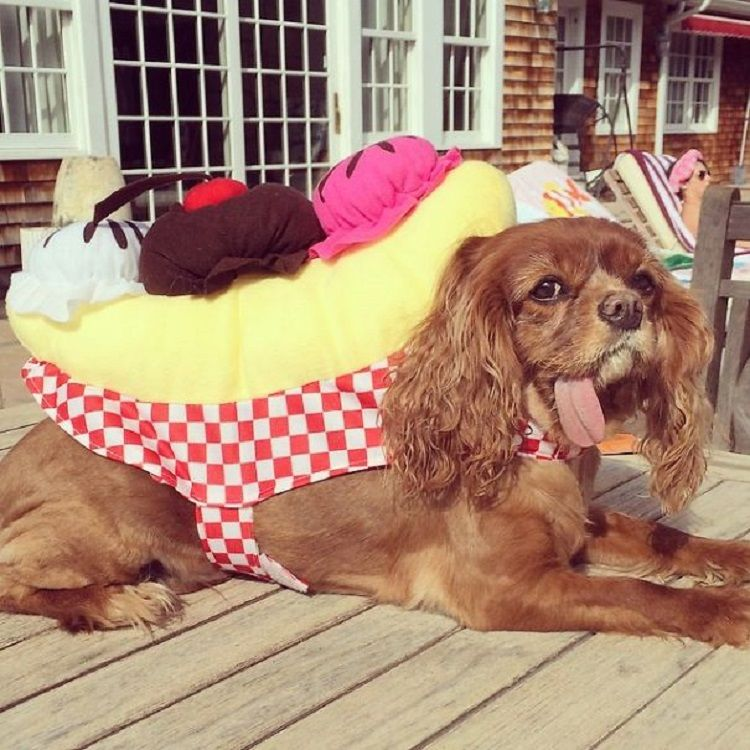 This Is Toast And He Is The Cutest Cavalier King Charles Spaniel
