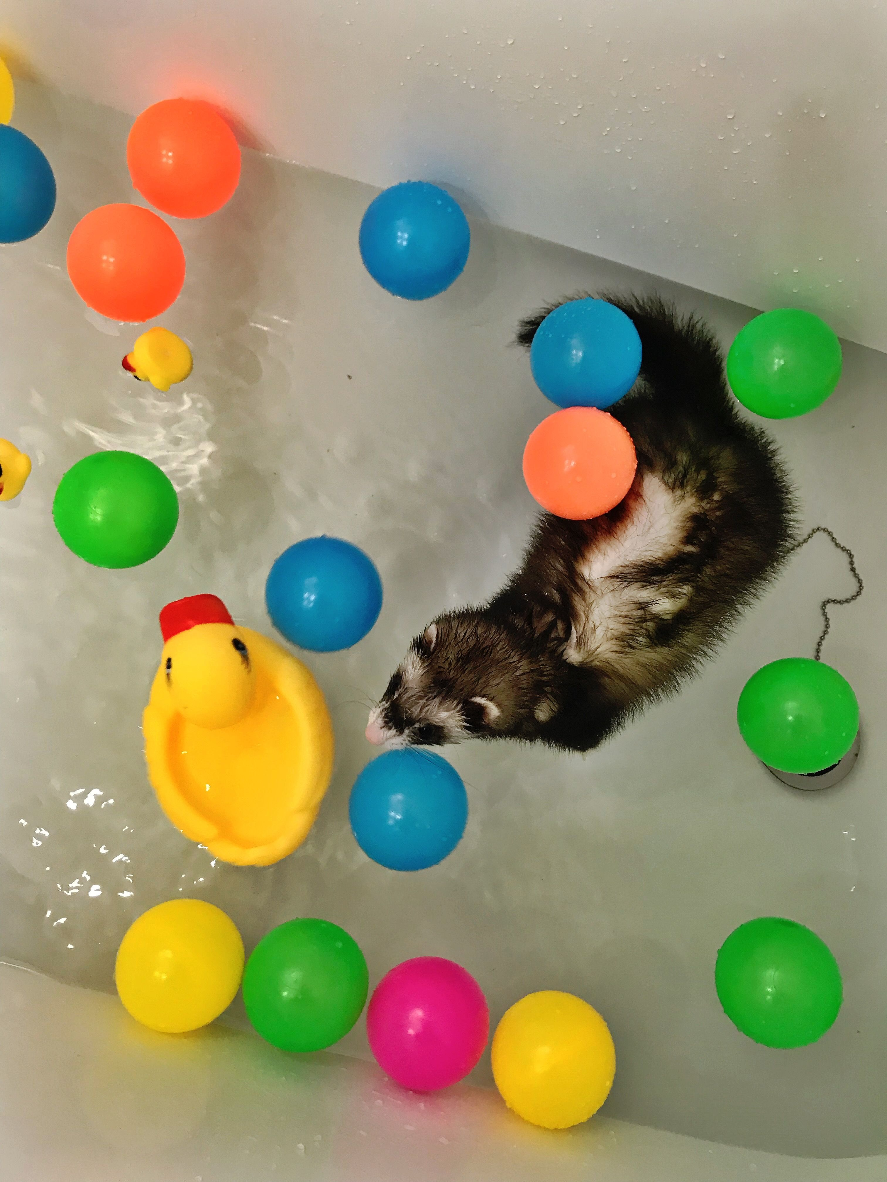 Pin By Kenna Castleberry On Future Adventures Dog Pictures Cute Animals Ferret