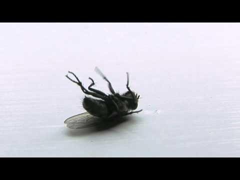 Bug Wisdom Fly Orkin Pest Control Orkin Bugs