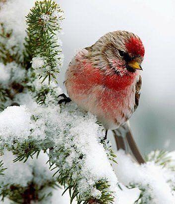 Пин от пользователя галина на доске птицы | Зимние сцены ...
