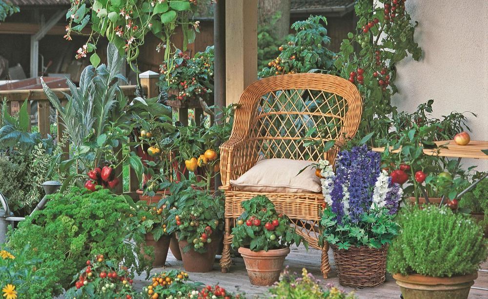 balkongem se die besten sorten f r k bel und k sten balcony gardening garten and gardens. Black Bedroom Furniture Sets. Home Design Ideas