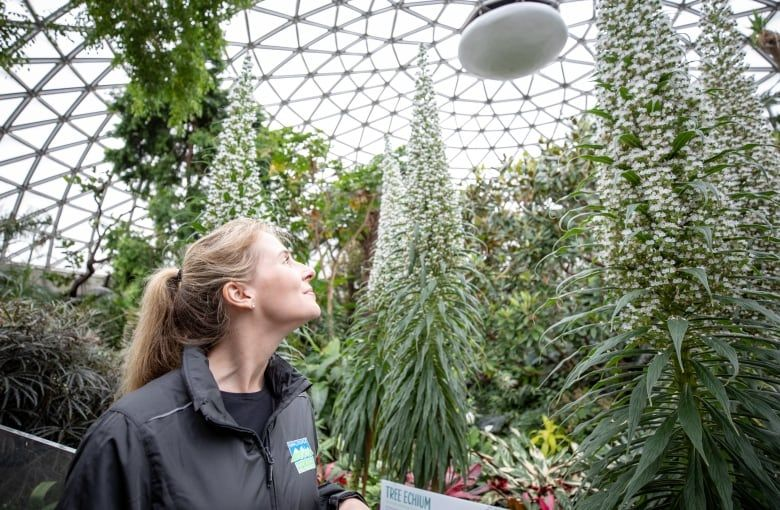 Bloedel Conservatory Welcomes New Big Blossoming Plants Cbc News Carbon Sequestration Conservatory Canary Islands