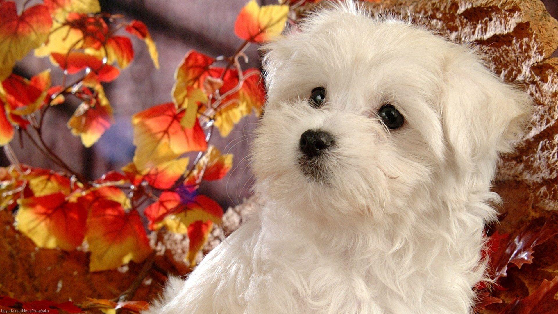 Animaux chien chiot mignon animaux fond d 39 cran for Fond ecran chiot