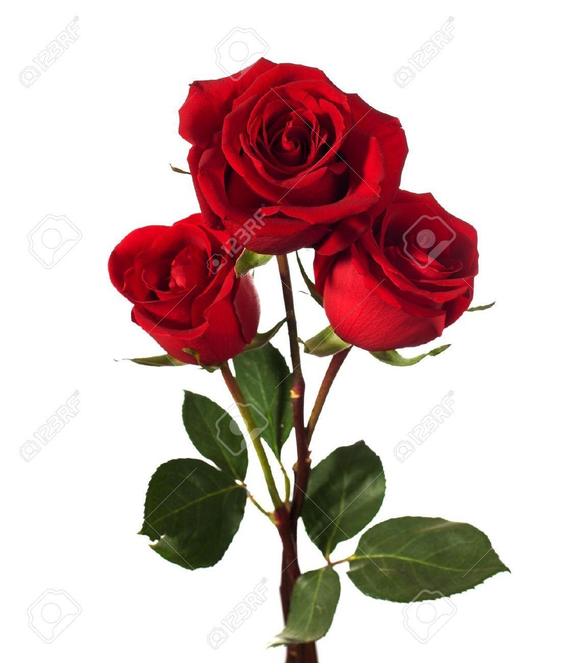 Roses Google Search Pinterest