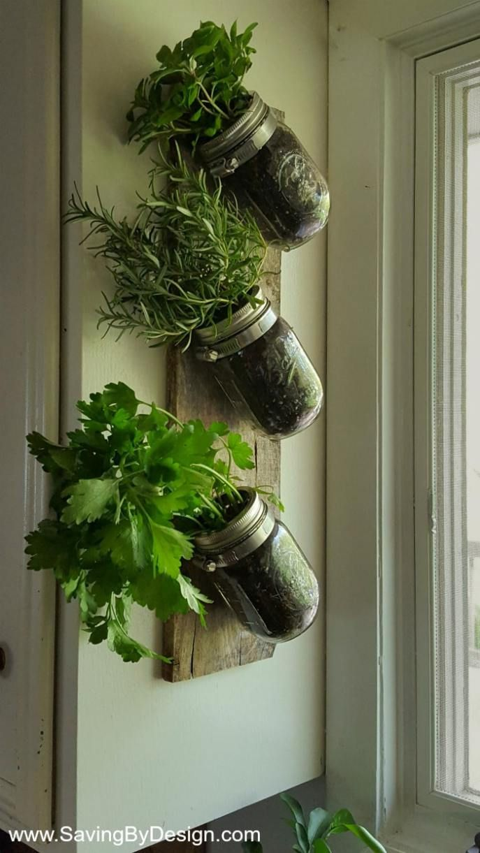 mason jars clamps and a piece of wood are all you need on indoor herb garden diy wall mason jars id=50511