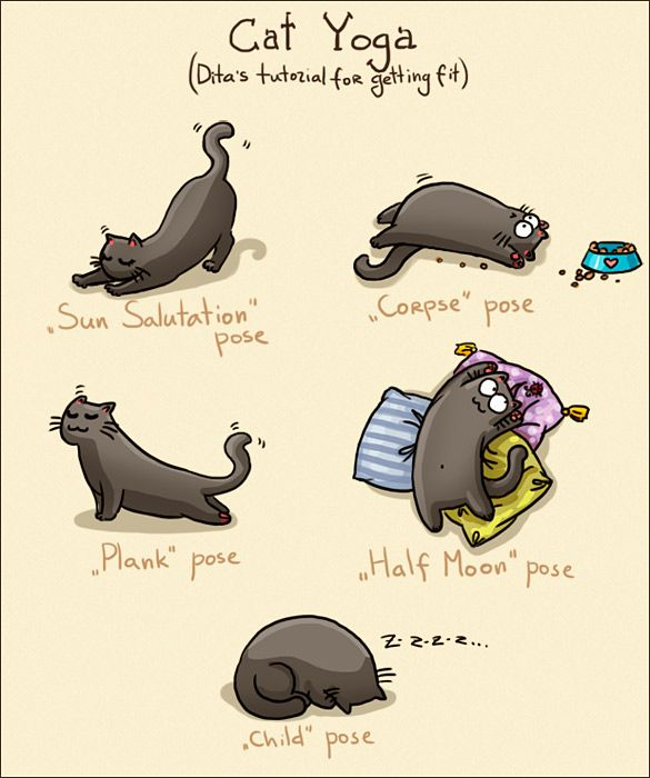 Simply genial: #Blackcats and #Yoga together in the comic