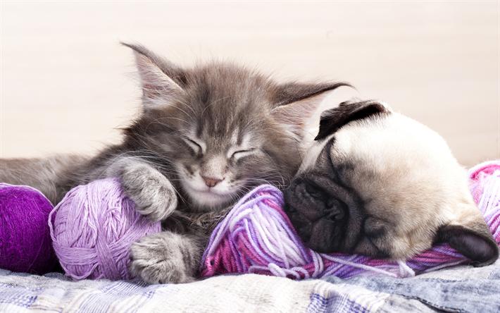 Download Wallpapers 4k Pug Kitten Puppy Dogs Friendship Cats Sleeping Cat Sleeping Dog Cute Animals Pets Pug Dog Mops Hund Mops Schlafende Katze