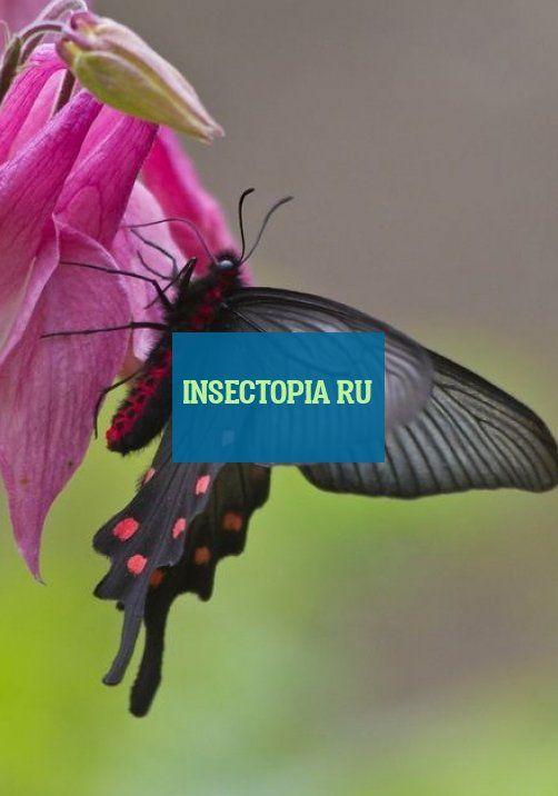 Insectopia Ru Insectopia Ru