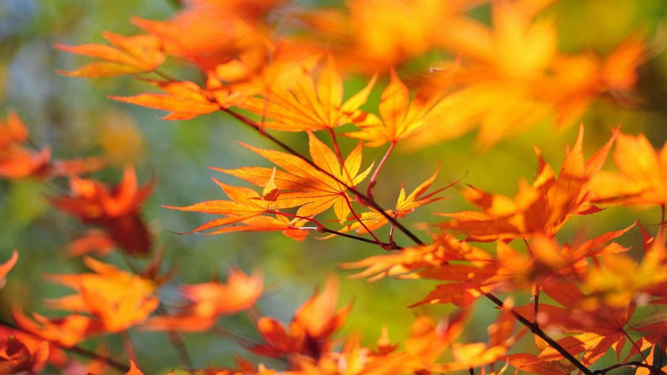 Widescreen Autumn Leaf Wallpaper 2560 1440 Lockscreen Autumn