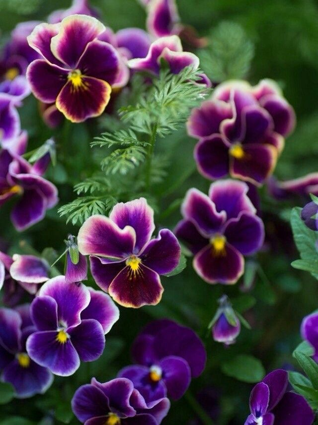 Пин от пользователя Alyona на доске Цветы | Цветы, Посадка ...