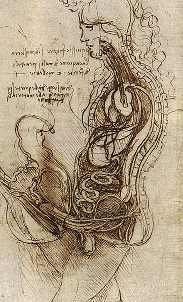 Leonardo da Vinci. Anatomical Studies. Coition of a Hemisected Man ...