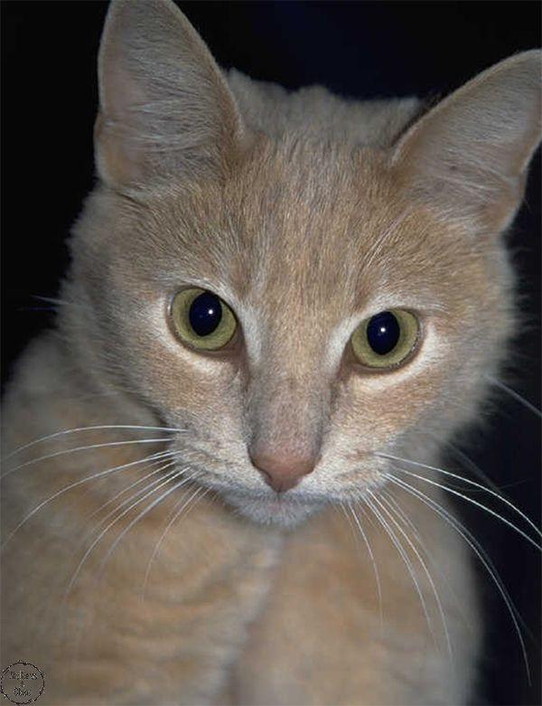 Perdi meu gato. E agora?