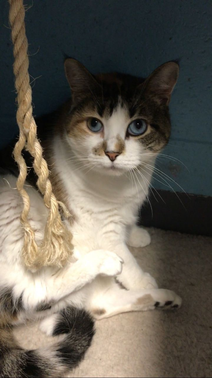 Adopt Frankie On Petfinder Help Homeless Pets Cat Adoption Cat Shelter