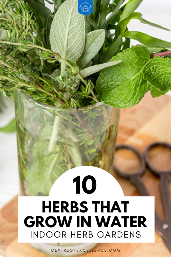 Indoor Herb Garden 10 Herbs You Can Grow In Water With Images