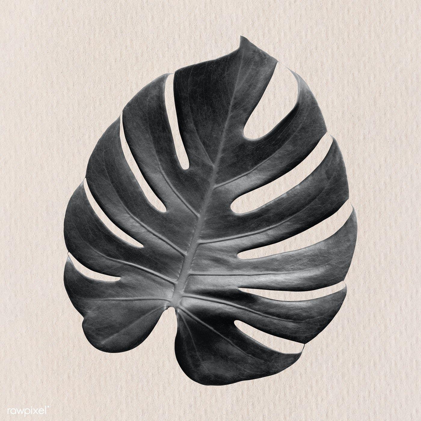 Download Premium Illustration Of Gray Monstera Leaf On A Beige Background Beige Background Monstera Leaf Leaf Design
