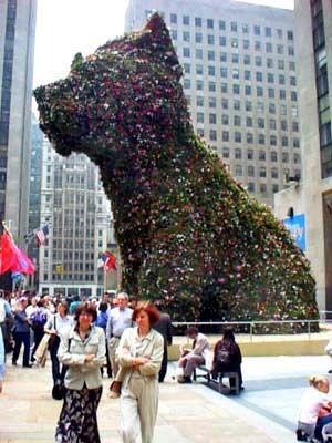 Jeff Koons' Puppy, Rockefeller Center 2000