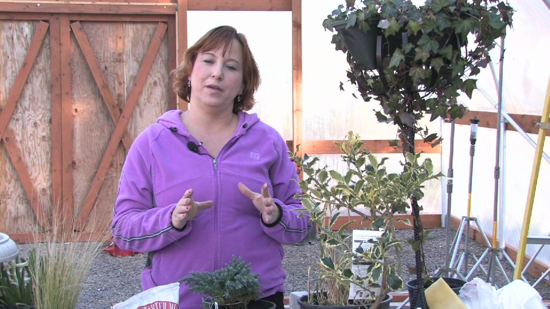 Gardening Tips How To Prune A Crape Myrtle Into A Tree Crape Myrtle Crepe Myrtle Gardening Tips