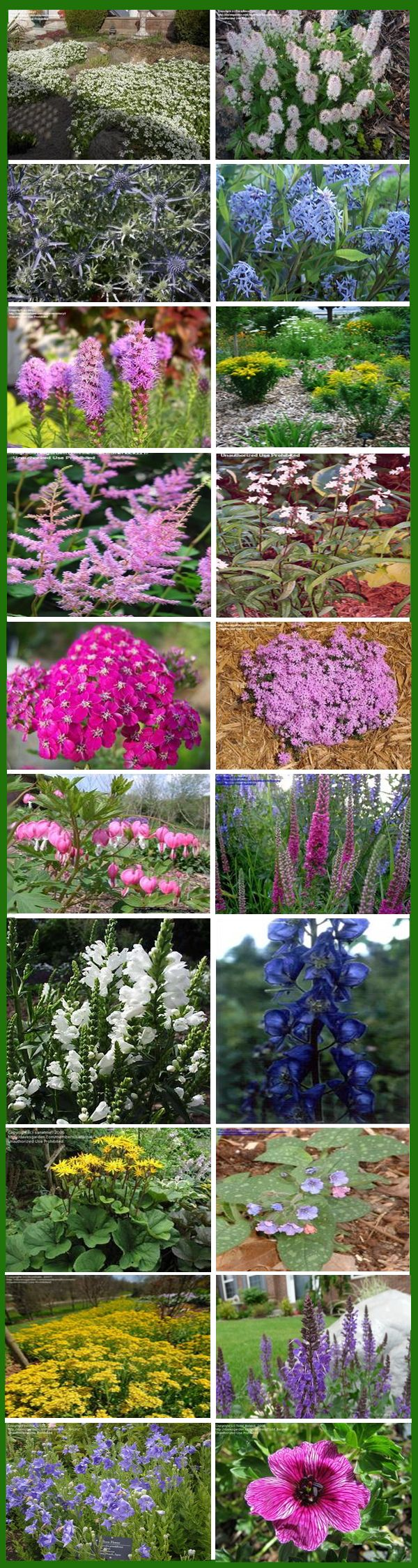 Endless Bloom Perennial Garden: Non-stop flowers from spring ...