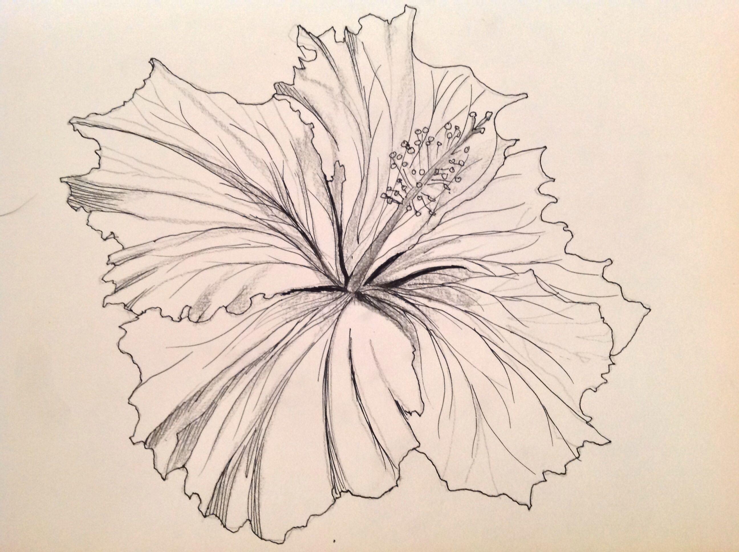 Black and white hibiscus drawings art love light ink pinterest black and white hibiscus drawings art love light izmirmasajfo