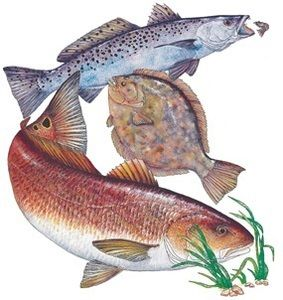 Fishing For Trout Flounder Red Fish Bing Images This Is What We Call The Texas Trio Fish Red Fish Fish Art