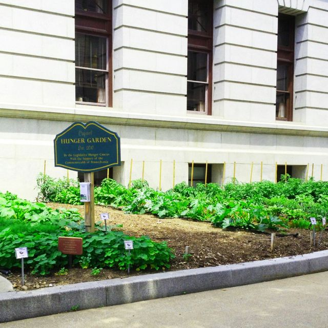 Capitol Hunger Garden on the grounds of the Pennsylvania State Capitol in Harrisburg benefits local food banks http://pahungergarden.org/