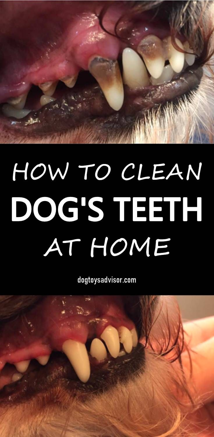 The Best Ways To Clean Tartar Off Dog S Teeth Glamorous Dogs Brushing Dogs Teeth Dog Teeth Care Dog Toothpaste