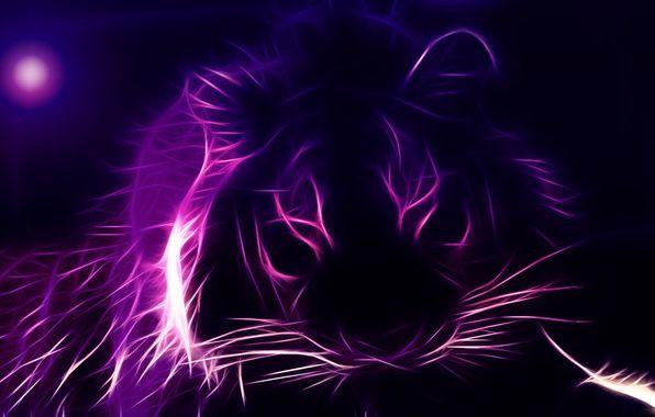 Wallpaper Tiger Face 3d Graphics Wallpapers Rendering Download Purple Cat Purple Wallpaper Purple Backgrounds