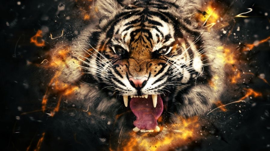 tiger head fire wallpaper