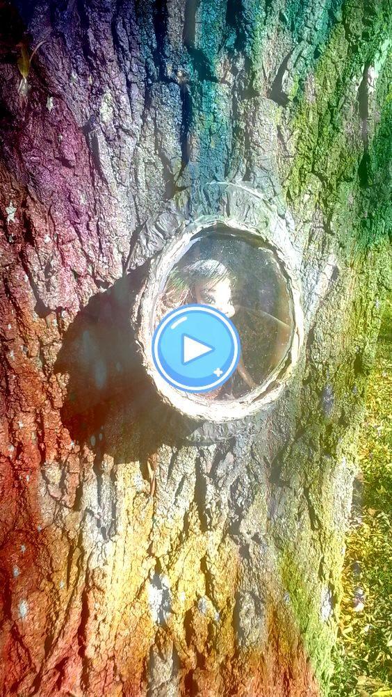 fantastische DIY Fairy Garden DesignIdeen 50 fantastische DIY Fairy Garden DesignIdeen 50 fantastische DIY Fairy Garden DesignIdeen Tree House Fairy Garden  Fairy Garden...