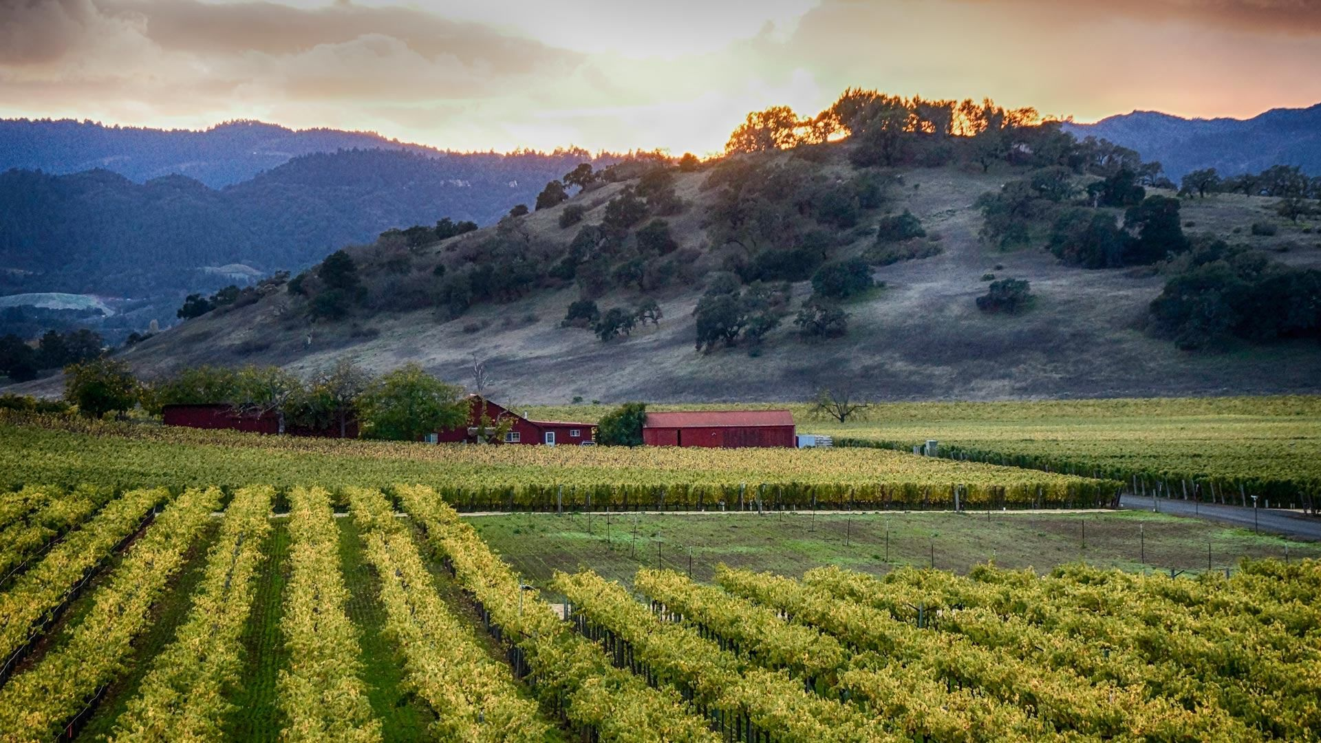 Explore Sonoma County Wine Country On Vacation Wine Country