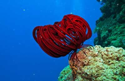 Dive into the Great Barrier Reef with the First Underwater Imagery ...