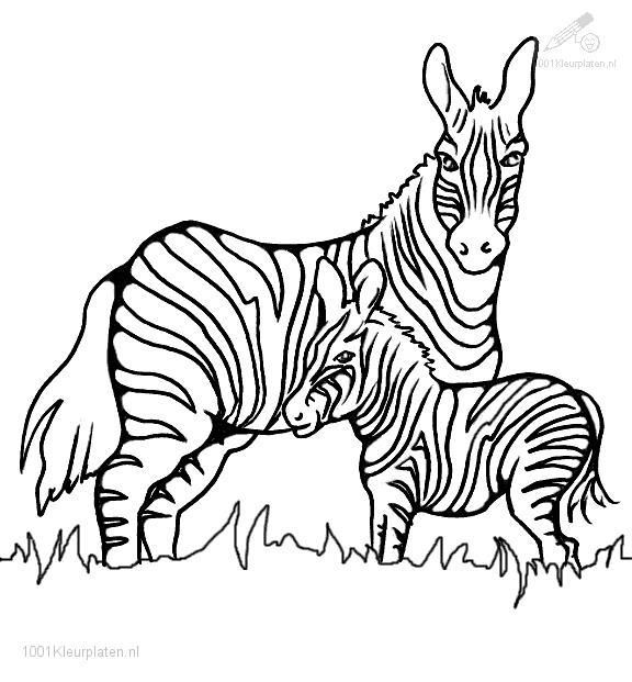 Chipmunk Drawing Baby Mother Google Search Zebra Coloring Pages Zebra Drawing Zebra