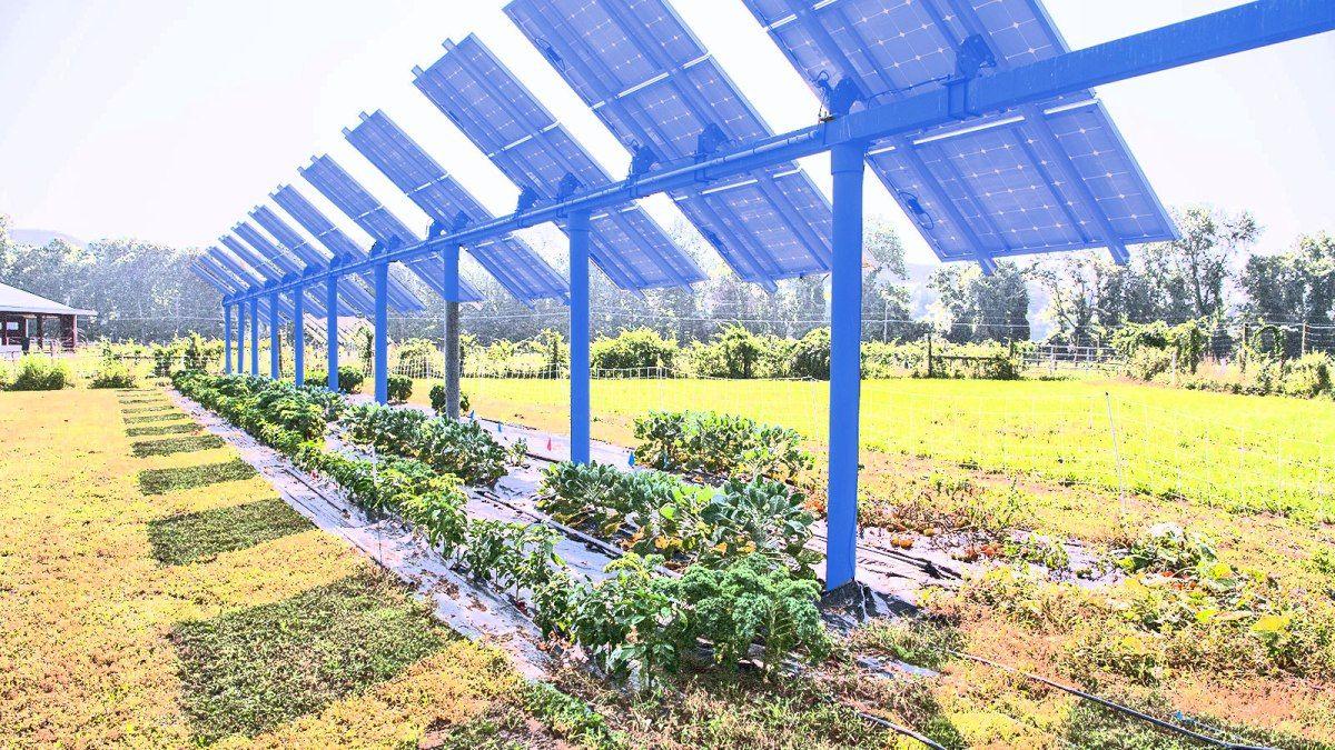 Cash Strapped Farms Are Growing A New Crop Solar Panels In 2020 Solar Farm Crop Farming Solar
