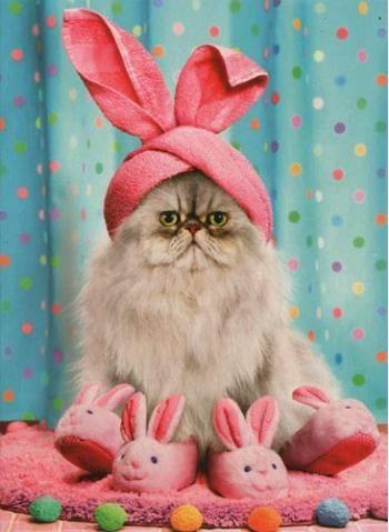 Resultado de imagen de felices pascuas gato