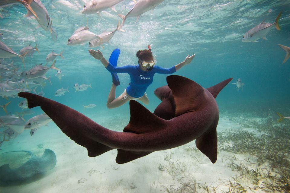Swimming with a nurse shark #travel #bucketlist