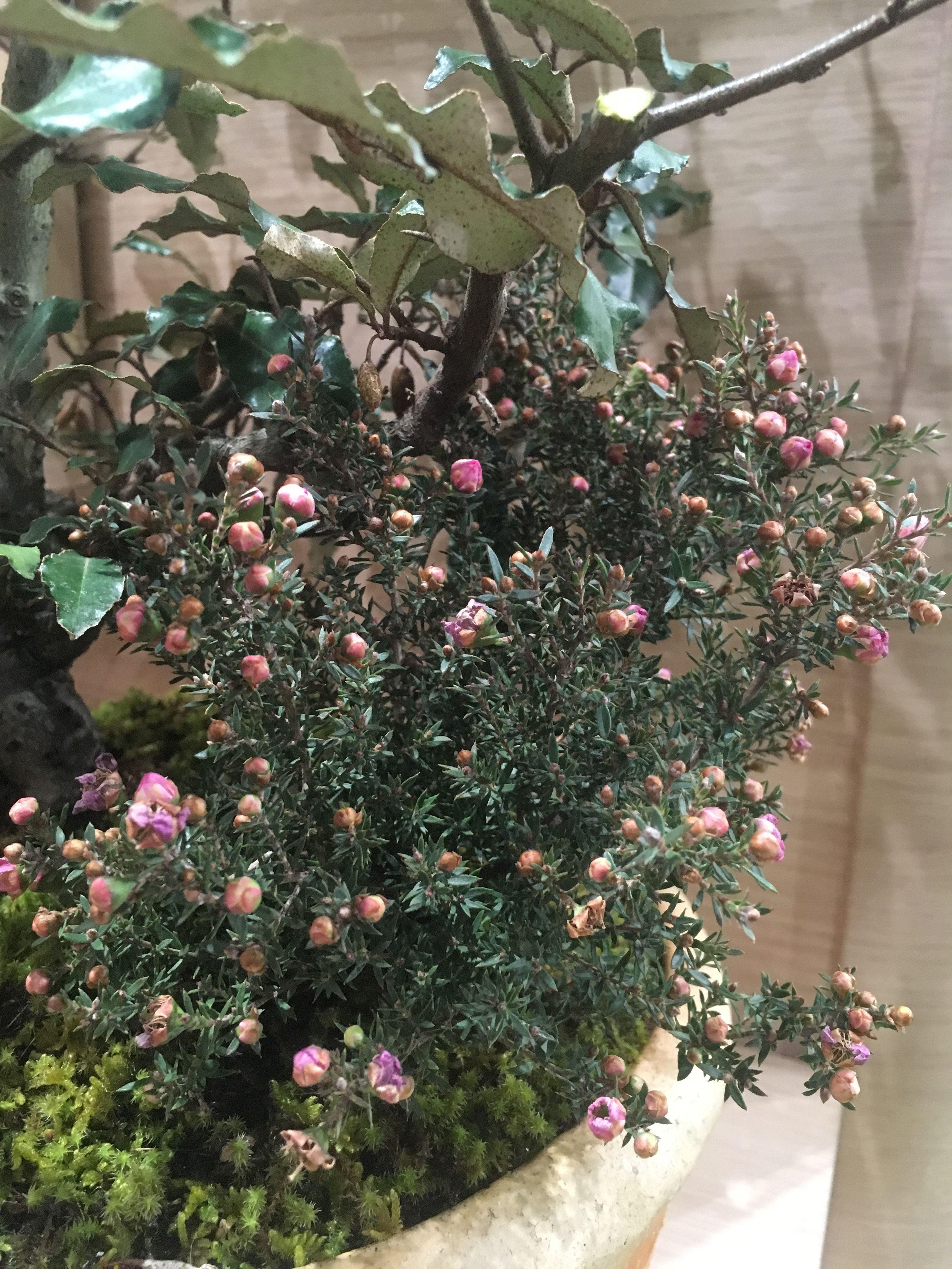 の の 梅 別名 花