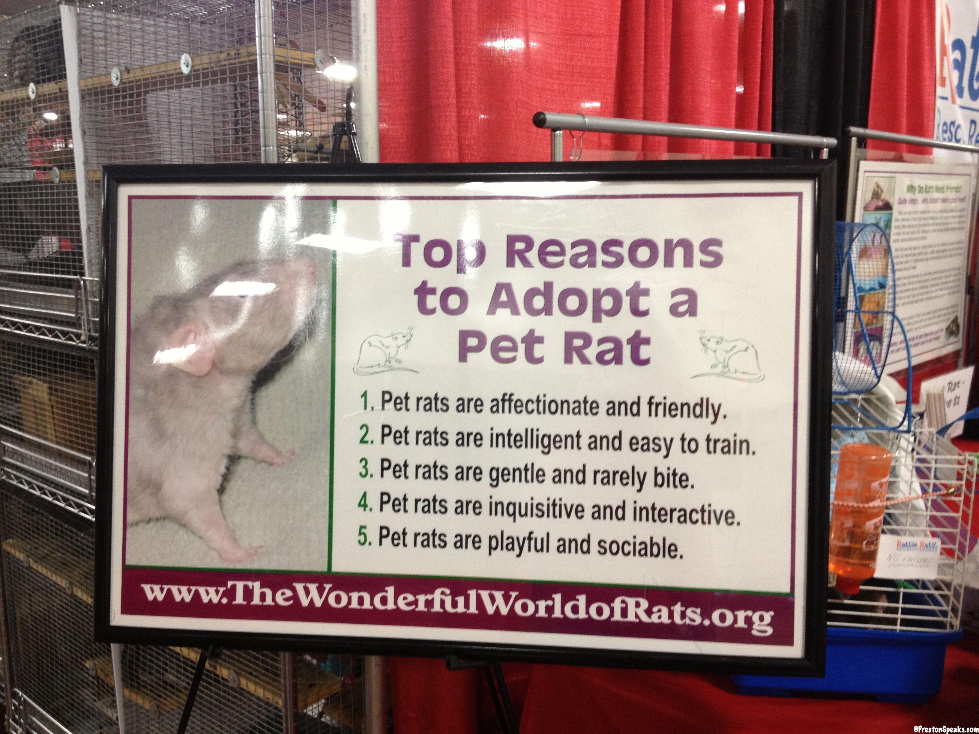 2013 Bay Area Pet Expo Pet rats, Pet travel, Pets