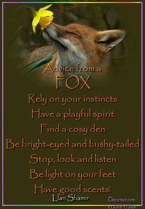 Sly like a fox | Advice quotes, Mother nature quotes, Nature